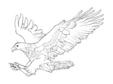 Bald Eagle Coloring Page  crayolacom